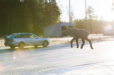 På NAFs glattkjøringsbane ved Fetsund trener elevene på å møte en elg i trafikken.