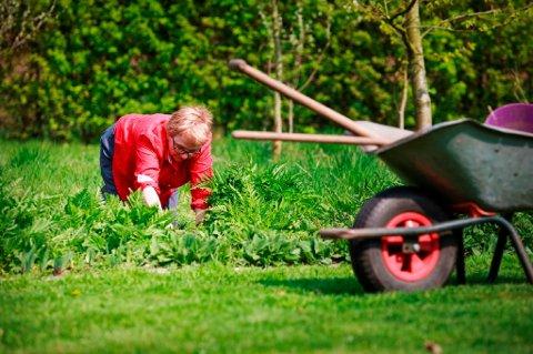 Mor vanner blomster og trær, far klipper plenen og beskjærer trær, ifølge en ny undersøkelse. (Foto: Colourbox/ANB)