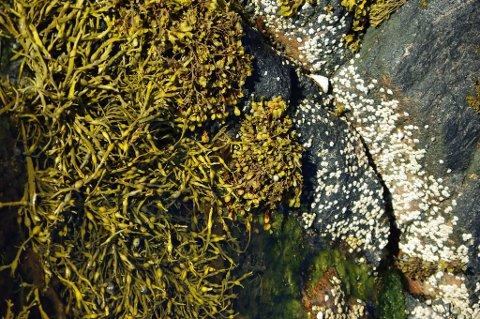 Tang har en rekke egenskaper som kan redde plantene fra feriedøden.