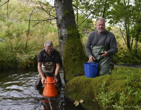 IDYLL: Her styrer kommunens miljøsjef Håvard Bjordal og professor Per Jakobsen på i Haukåselven. – Vi har en internasjonal forpliktelse til å ta vare på elvemuslingene, sier Jakobsen. FOTO: MAGNUS JOHAN STEINSVÅG