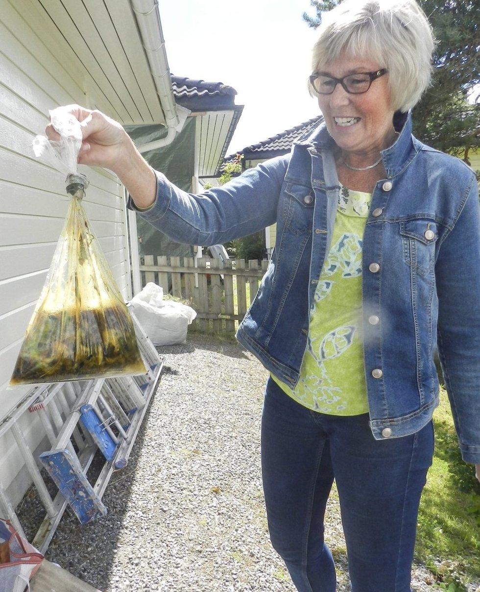 Plukker: Denne plastposen er full av snegler.