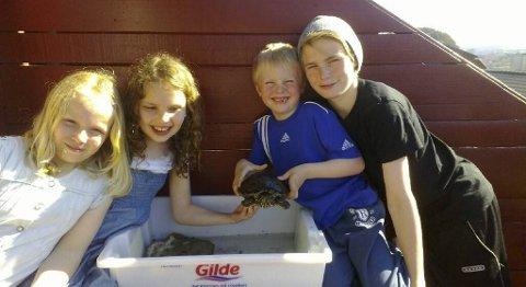 Maren Sundt (7), Marie Nedraas (9), Adrian Solberg Teigen (6) og Alexander Solberg Teigen (12) med skilpadden Leon.