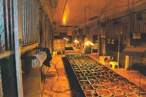 GIGANTFARMEN: Slik så det ut innenfor veggene på driftsbygningen i Fet. Cannabisen ble dyrket på en profesjonell måte med vanningssystemer, vifter og lys.  Alle Foto: Politiet