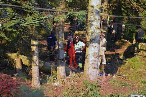 Den tragiske ulykken skjedde i forbindelse med felling av dette treet. Kvinnen falt ned skrenten på oversiden. Motorsagen sto fremdeles i veden da redningsetatene kom frem.