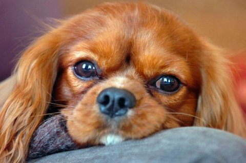 Her er det siste middel i kampen mot stress på jobben: Kontorhund.
