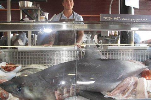 Den store haien er en håbrann. Sebastian Bernard trengte hjelp av to andre for å bære beistet inn bak fiskedisken.