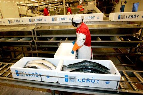 SUNT OG GODT: Oppdrettslaks skal i likhet med annen sjømat, spises mye av.