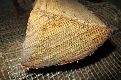 Muggsopp på ved: Det ser kanskje ikke så mye ut, men med en slik muggsoppkilde midt i stua blir det dårlig inneklima (Foto: Mycoteam).