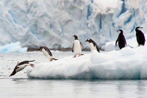 ?TIL?SOGNDAL: Jørn Allan Pedersen kjem med fotoutstillinga frå den Antarktiske Halvøya til Galleri Krydder.