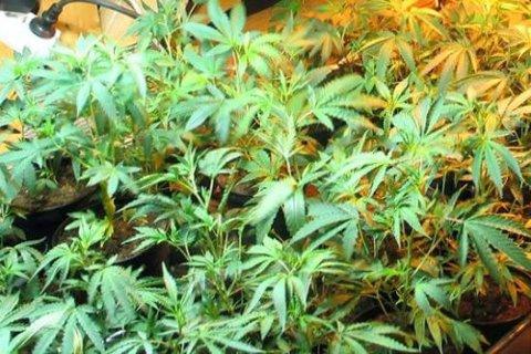 I leiligheten ble de møtt av et stort antall cannabisplanter som vokste frodig inne i tre spesialbygde telt utstyrt med lamper, vanningsanlegg og luftkondisjonering (illustrasjonsfoto).