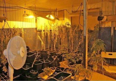 3.400 planter fant politiet i bygningen.
