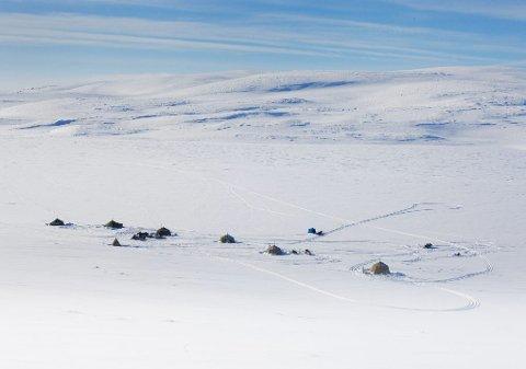 Stura Mollesjavre, 780 moh. Her inne har Idar Sandvik sitt paradis. Landsbyen.