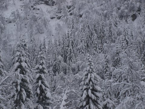 Til helgen kommer kong vinter på besøk igjen.