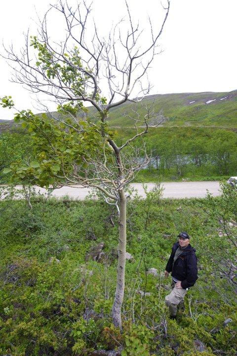 MERKELIG: Ospen vekker undring rundt om i landet. Per Ingebrigtsen fra Båtsfjord stusset over dette eksemplaret.