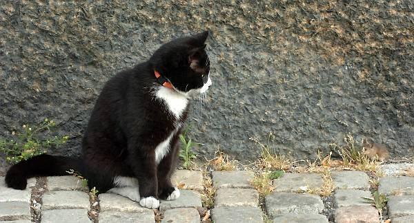 Vi har alle hørt uttrykket «kattens lek med musa». Nå kan vi se den. For her er bildene av et møte mellom «fiendene» i Oslo i dag. Ble dagen før fredag den 13. en ulykkesdag for musa? Svaret får du her.
