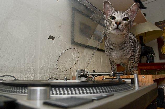 DJ-katten Bobbas digger vinyl.