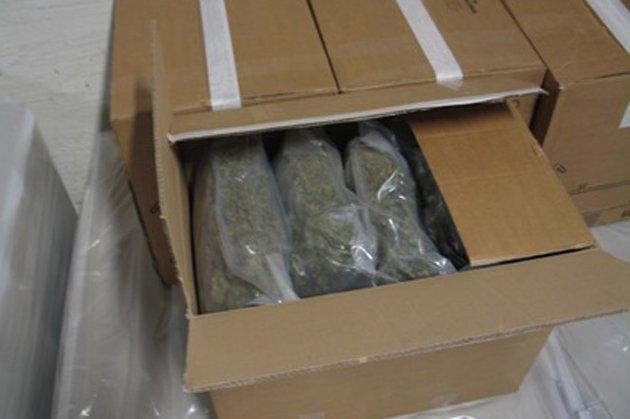 MARIHUANA: Tollerne fant både hasj og marihuana i trailerhengeren. Dette er bilde av det sistnevnte stoffet. FOTO: TOLLVESENET