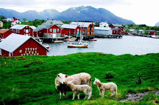 Øya Vega på Helgelandskysten er et populært reisemål. Vega kommune hadde store problemer med fraflytting og for få fuglevoktere til dunværene på Vegaøyan. Det snudde helt etter at Vegaøyan fikk verdensarvstatus i 2004.
