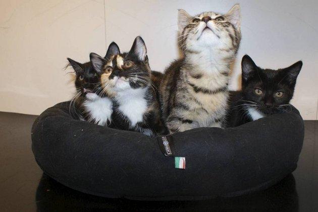 Disse kattungene ble funnet forlatt midt i veien. Esken de ble funnet i, var tapet igjen.