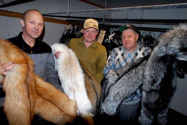 Utviklingen de siste årene har vært eventyrlig for tålmodige oppdrettere som Egil Kornkveen, Øivind Groven og Odd Dalum på Kvernmoen på Lesja.