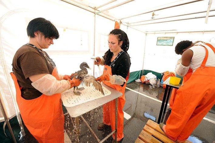 VASKERIET: Fuglevaskeriet i Langesund vasket mange fugler etter «Full City»-havariet. Ingen vet hvor mange vaskede fugler som har overlevd.