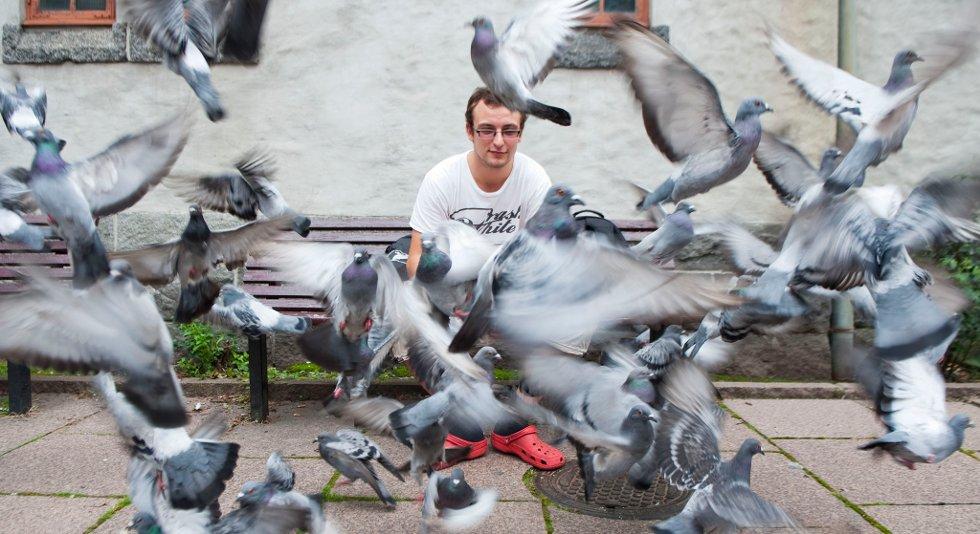 Daniel Haraldsen fjernet gøtt fra en due da to politibetjenter dukket opp. Et vitne trodde han torturerte duer.