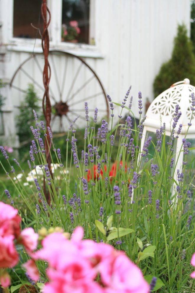 Forlengelse: ? Jeg elsker å være ute og jobbe i hagen. Det er moro å kunne lage til et fint utemiljø også, sier An-Magritt Moen om dette bildet.Foto: An-Magritt Moen