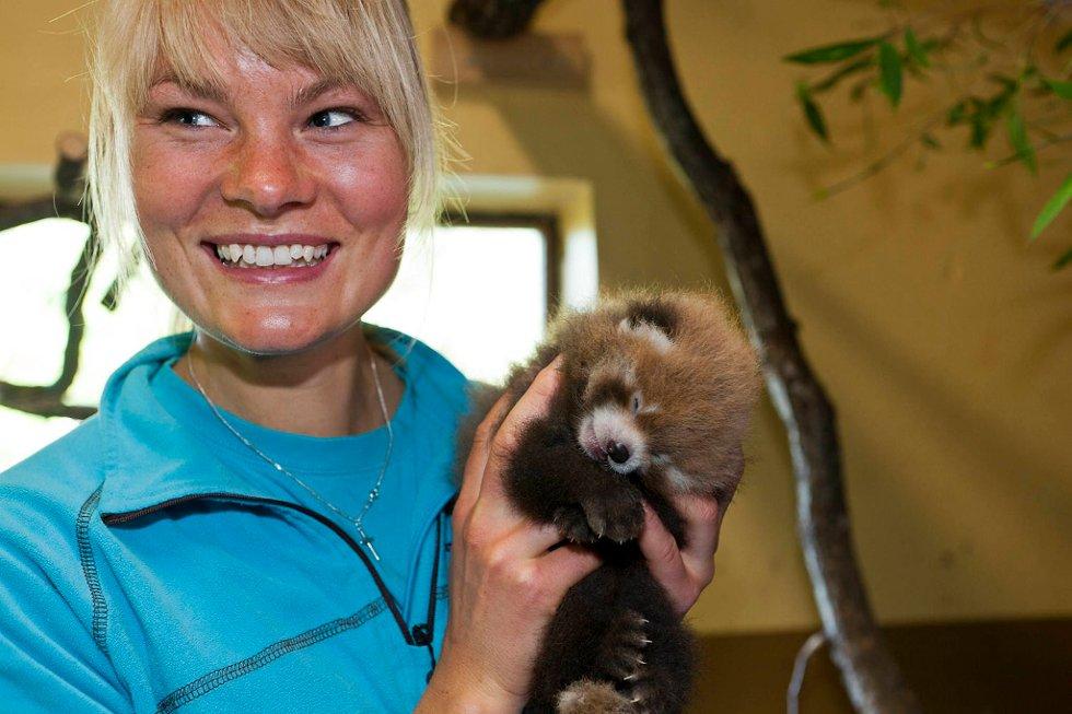 Dyrepasser og ansvarlig for Asia i Dyreparken, Hilde Strædet, viser stolt fram den nyfødte rødpandaen.