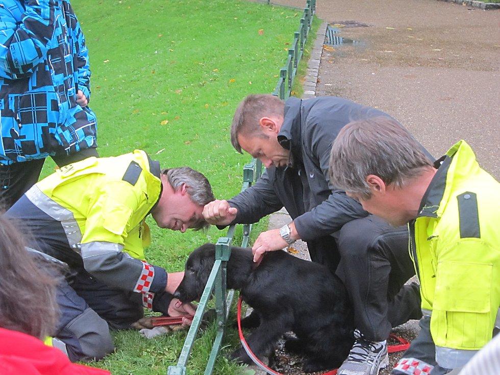 Etter et mislykket forsøk på å smyge seg gjennom gjerdet, måtte valpen Zyco ha hjelp.