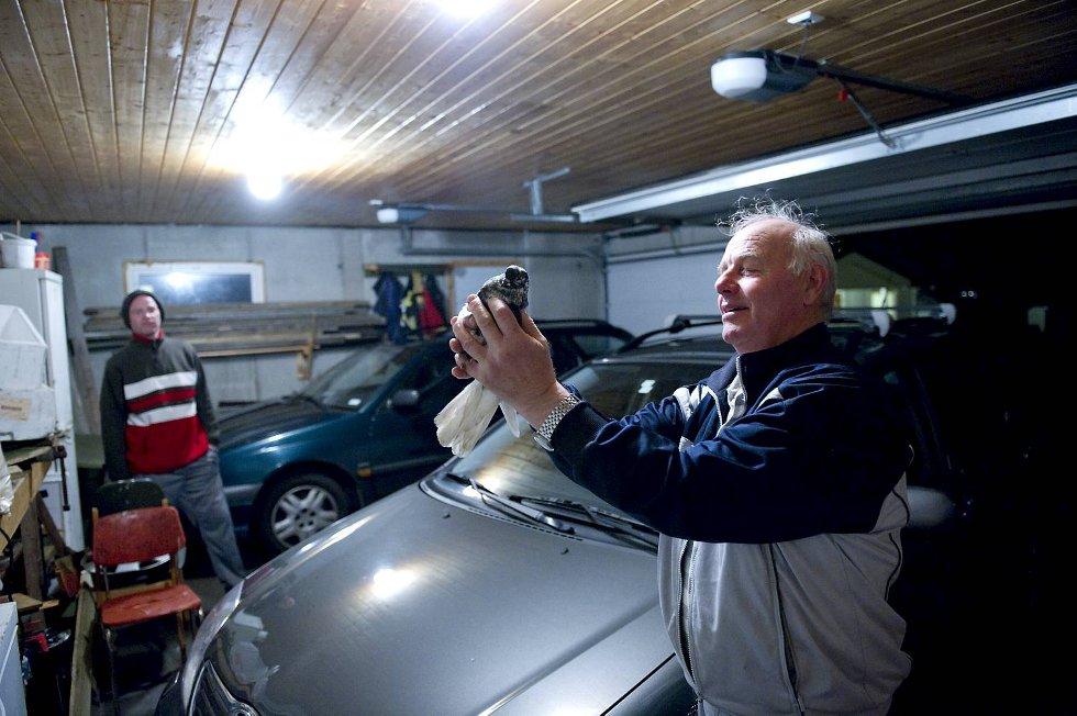 Hovedproblemet med duen, ifølge Ronny Hagelin, er at den driter ned bilene i garasjen hans.
