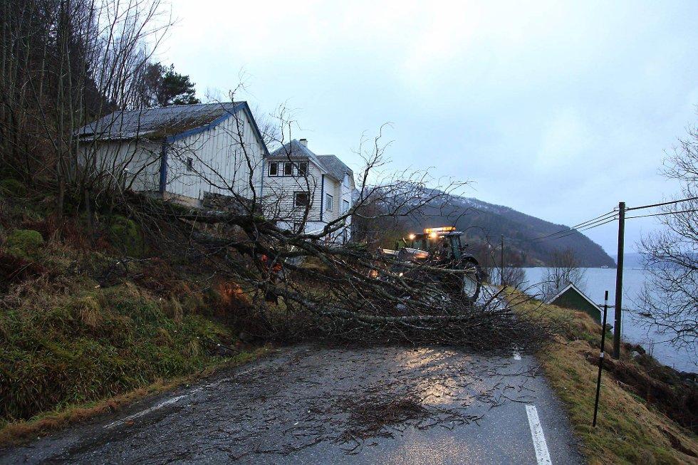 Flere store trær sperret veien ved Dombestein i Bremanger, Sogn og Fjordane. (Foto: Anita M. Ingebrigtsen, Firdaposten/ANB)
