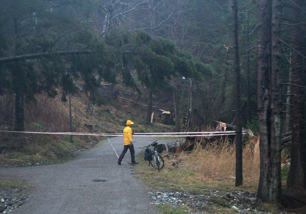 Dagmar førte til stengte veier Sogn og Fjordane; både på grunn av ras og veltede trær. (Foto: Olav Hatlemark, Firdaposten/ANB)