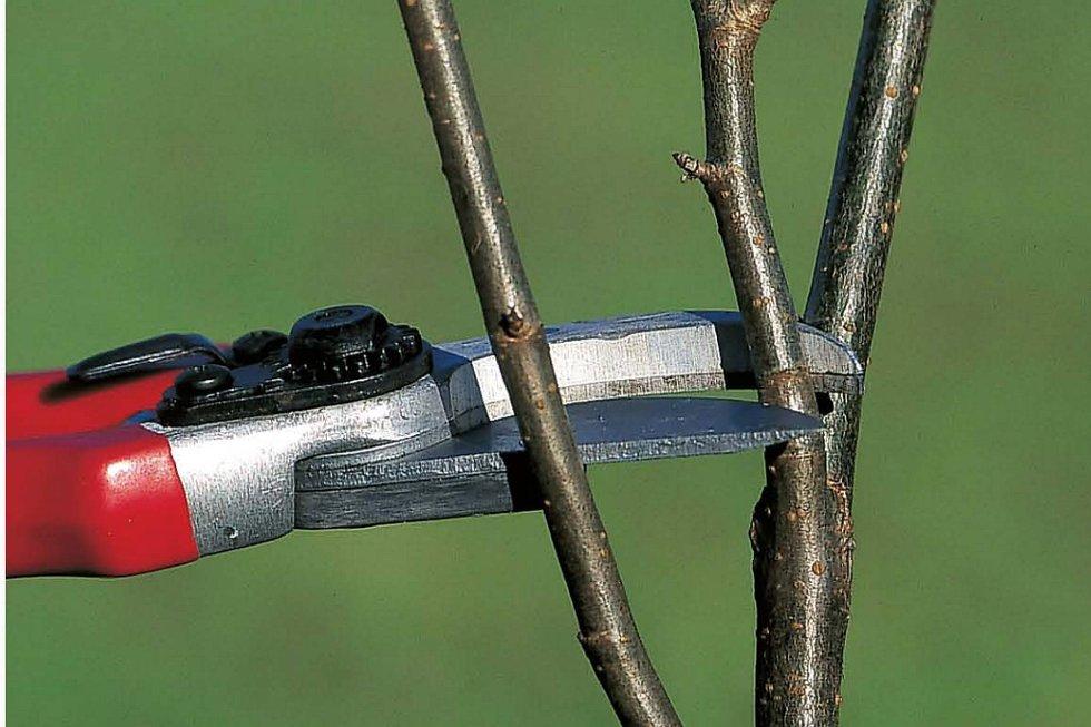 Snart er det tid for å bekjære trær og busker i hagen.