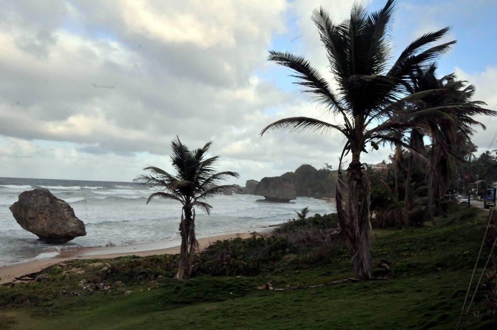 Vinden gjør sjøen ypperlig for halvgode surfere.  (Foto: Terje Alstad, ANB)