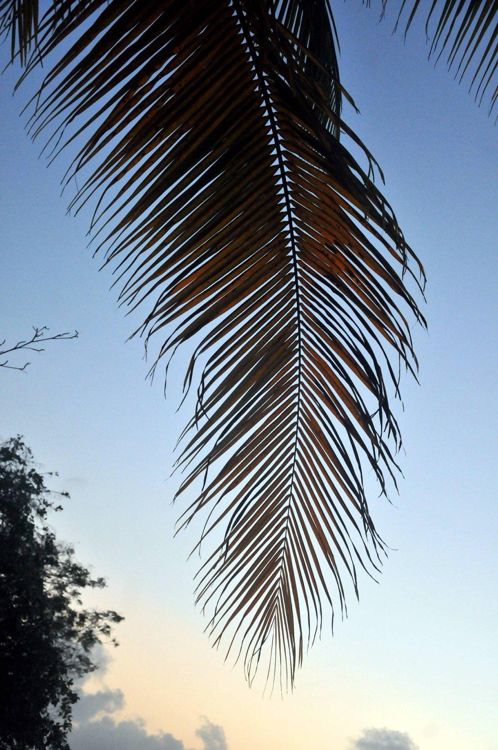 Barbados har et tropisk klima med en gjennomsnittemperatur mellom 25 og 30 grader gjennom hele året.  (Foto: Terje Alstad, ANB)
