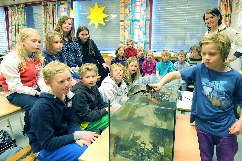 Emil Torjussen fikk lov å legge hummeren på plass i akvariet, mens klassekameratene fulgte nøye med.