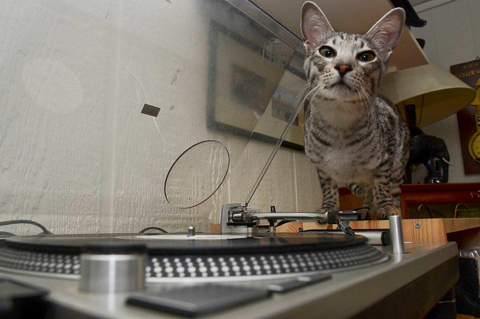 Katten Bobbas digger vinyl.