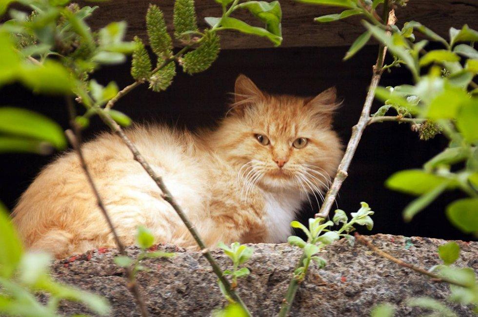 Katter sprer stygg lukt, sjenanse og irritasjon i fiskeværene i Lofoten.