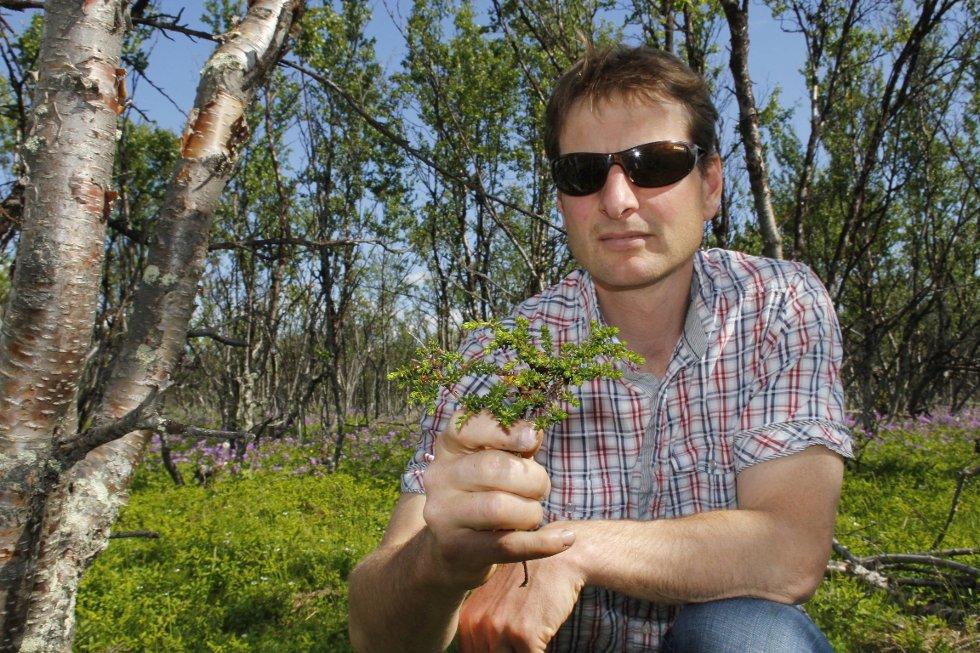 MYE LYNG: Vegetasjonen i skogbunnen har forandret seg de siste årene. Flere typer lyng, blomster og gress har fått bedre vekstvilkår.