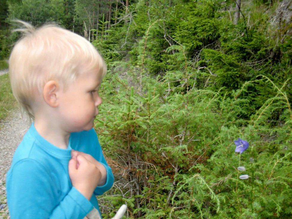 Kevin sender en sommerhilsen til familie og venner. Han elsker å være ute og oppdage naturen, her studerer han en blåklokke. Foto: Liv T. (Foto: )