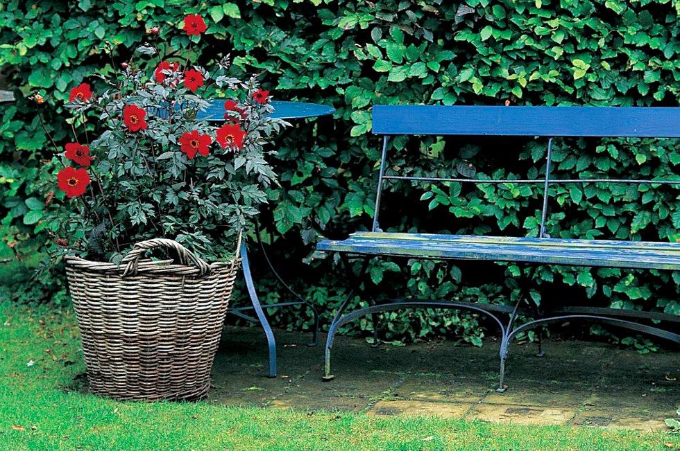 """Søndag er det klart for """"1000 åpne hager"""" igjen. Besøk en hage i nærheten og få inspirasjon til din egen."""