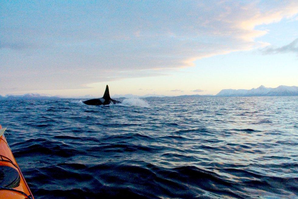 Flott syn på Andfjorden. (Foto: Remi Nyheim)