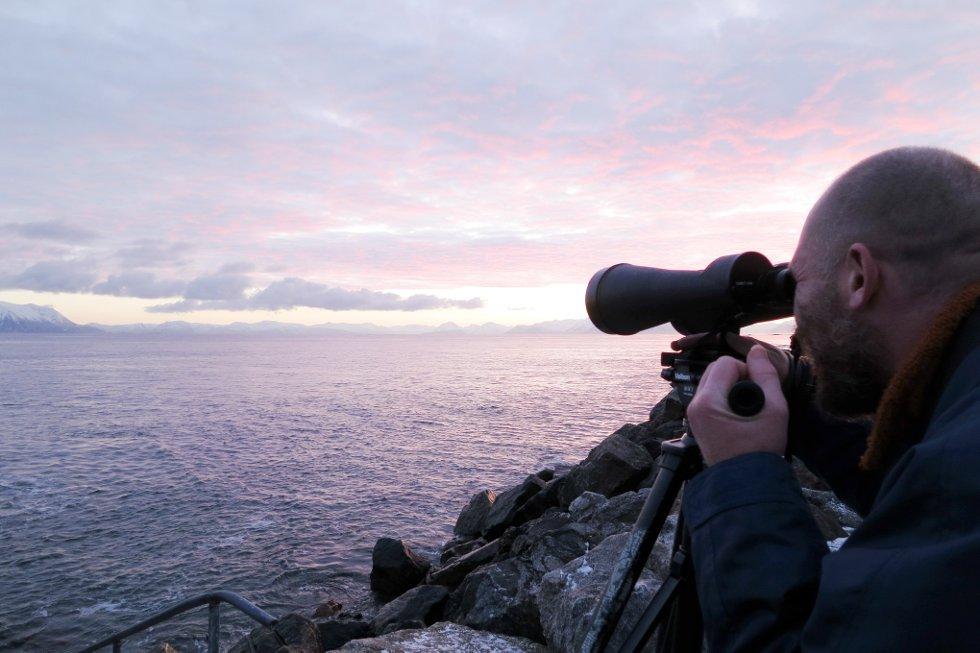 Kvalene i Andfjorden kunne observeres også fra land. (Foto: Marian Leonhardsen)