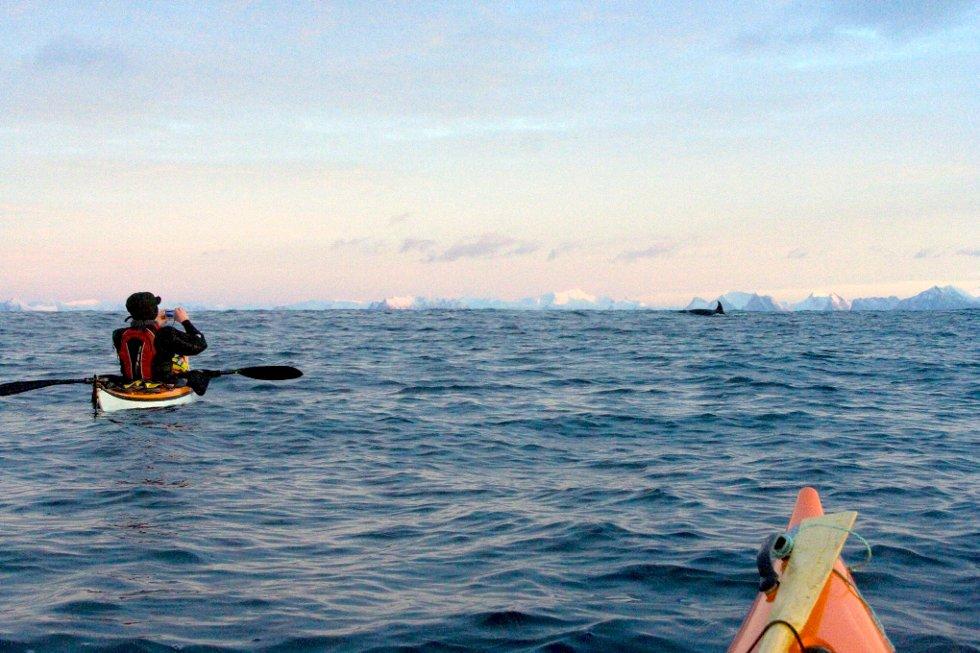Marian Leonhardsen tok bilder av spekkhoggerne og filmet kvalene i Andfjorden. (Foto: Remi Nyheim)