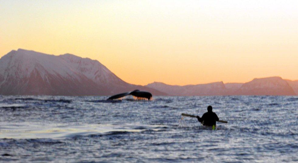 - Dessverre ikke helt skarpt, men gir et inntrykk av hva vi opplevde i Andfjorden søndag. (Foto: Ola Løftingsmo)