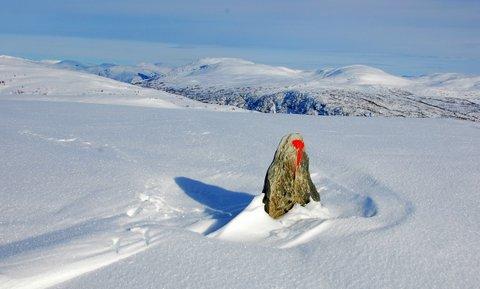 Kolingseggji, 941 moh, fredag 22.02. Turen går fra Lemme på Voss via Liaset. (Foto: Hilde Marie Kårbø)