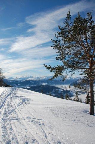 Utsikt fra Liaset. (Foto: Hilde Marie Kårbø)