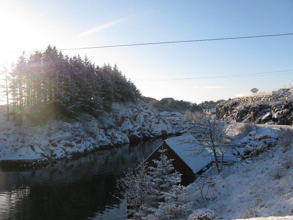 Baløy i vinterdvale. (Foto: Marit Øksnes)