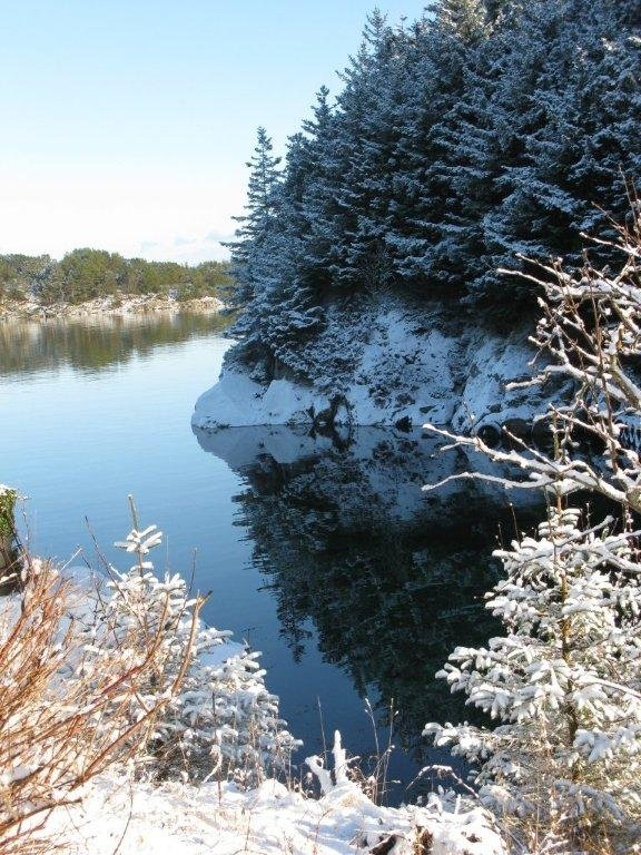 Baløy i vinterdvale (Foto: Marit Øksnes)