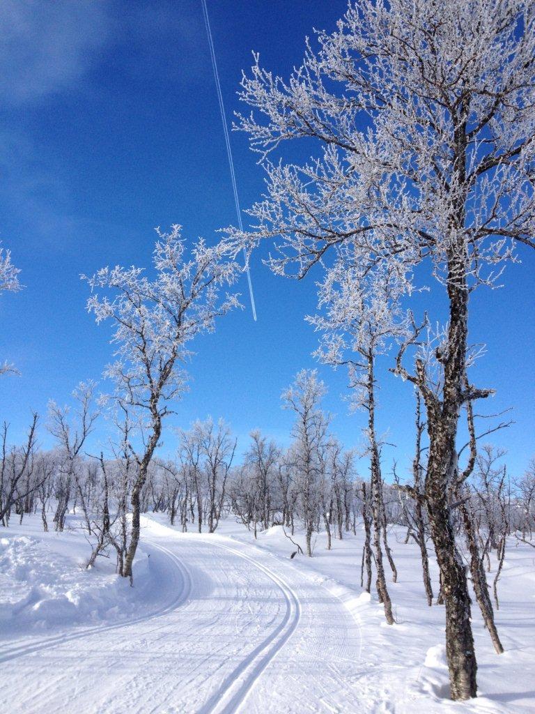 « Fly på vei til sol og varme » mens vi nyter skituren i sol og minus 14 grader?                 Hilsen Unni og Kårleiv Bratli                  (Foto: )